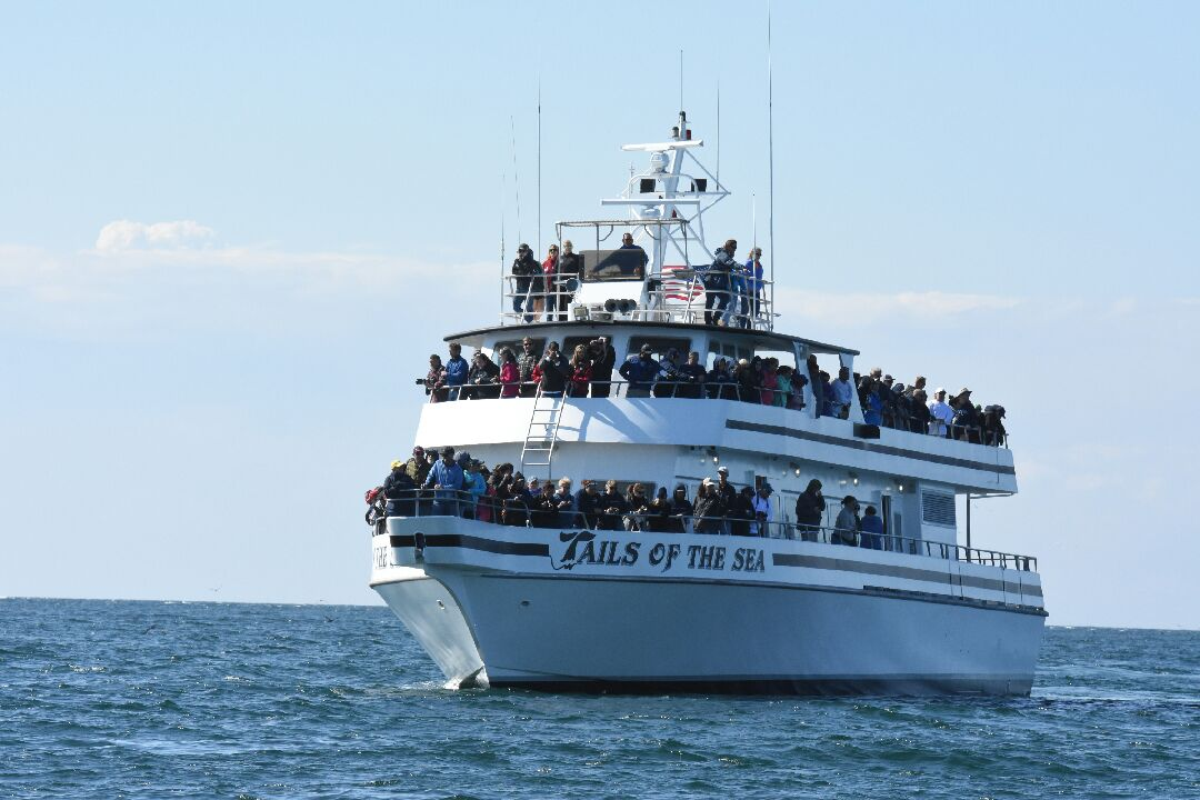tails of the sea boat on white shark and whale watch