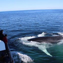Lindsay taking picture of a humpback whale emerging from the water