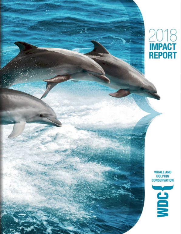 Three white sided dolphin leaping out of the water in tandem