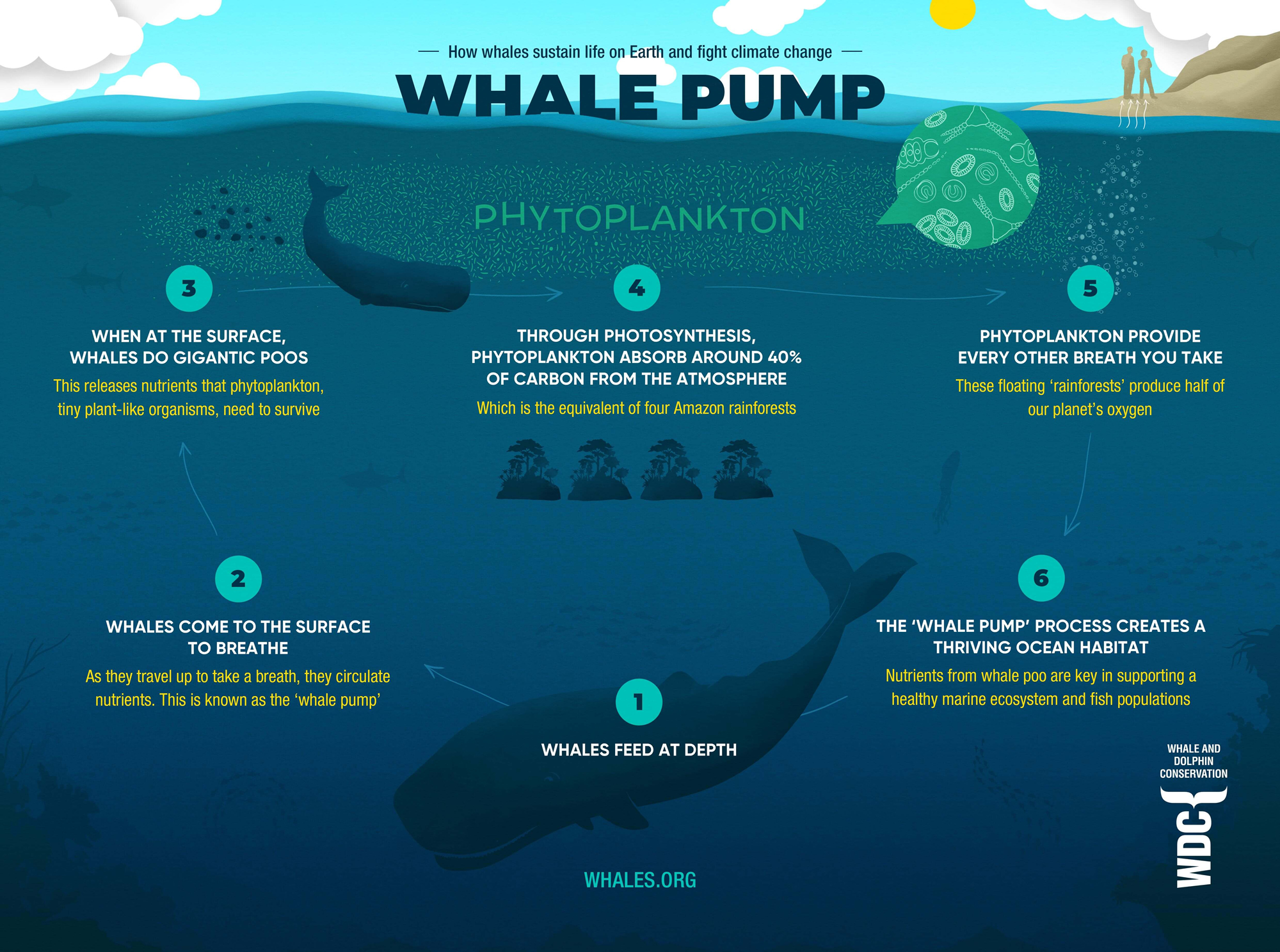 Whale Fall - When whales die they still help combat the climate crisis.