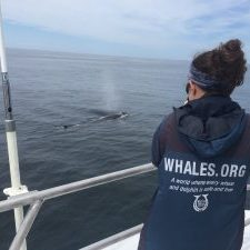 WDC Intern photographing a humpback whale
