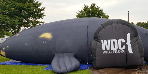 Delilah, our inflatable North Atlantic right whale